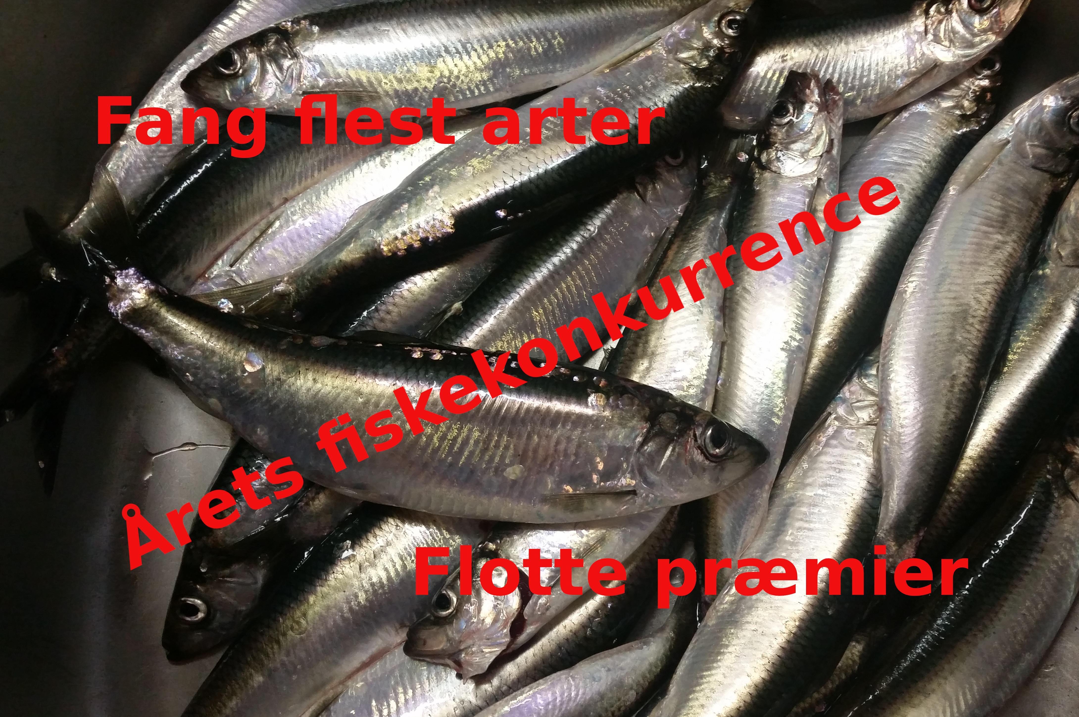 Sild til fiskekonkurrence